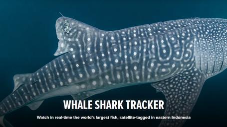 Whale Shark Tracker